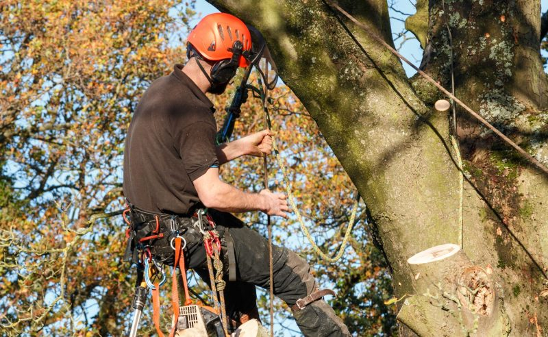 Tree Felling Services Dublin