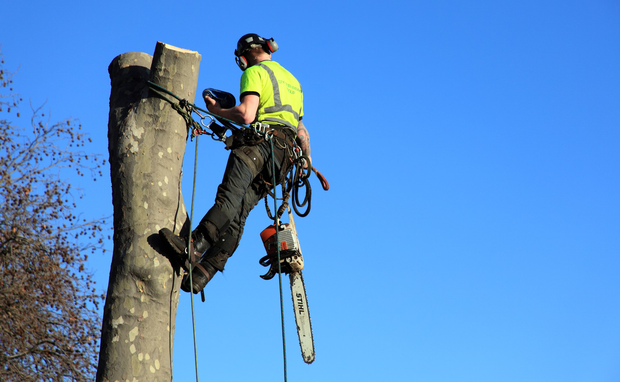 Tree Removal Dublin