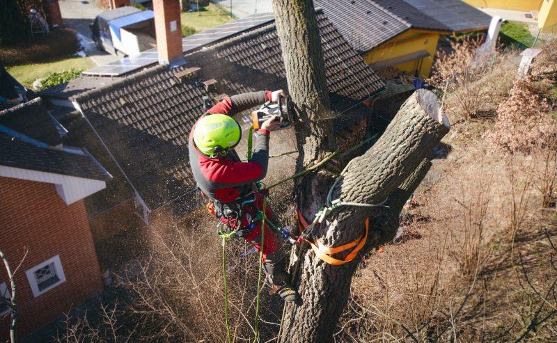 Tree Removal in Dublin